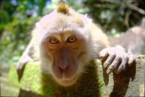 monkeypromo