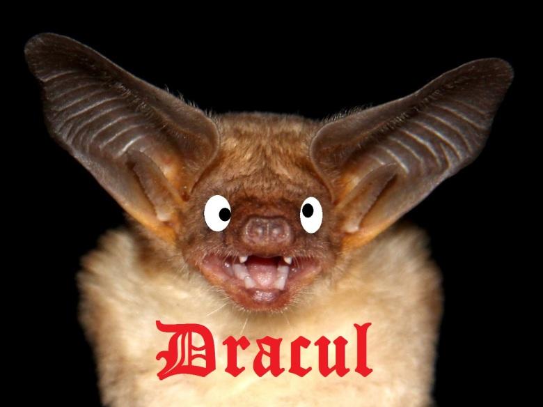 Dracul Bat image